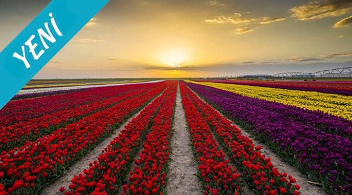 Antalya Çıkışlı Konya Lale Bahçeleri Turu (14 Nisan 2019)