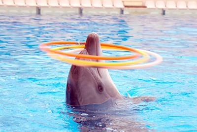 Antalya Dolphinland