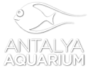 Antalya Aquarium Ticket