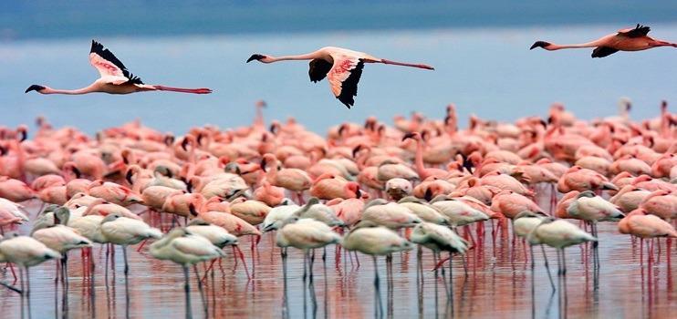 Kenya'da Safari