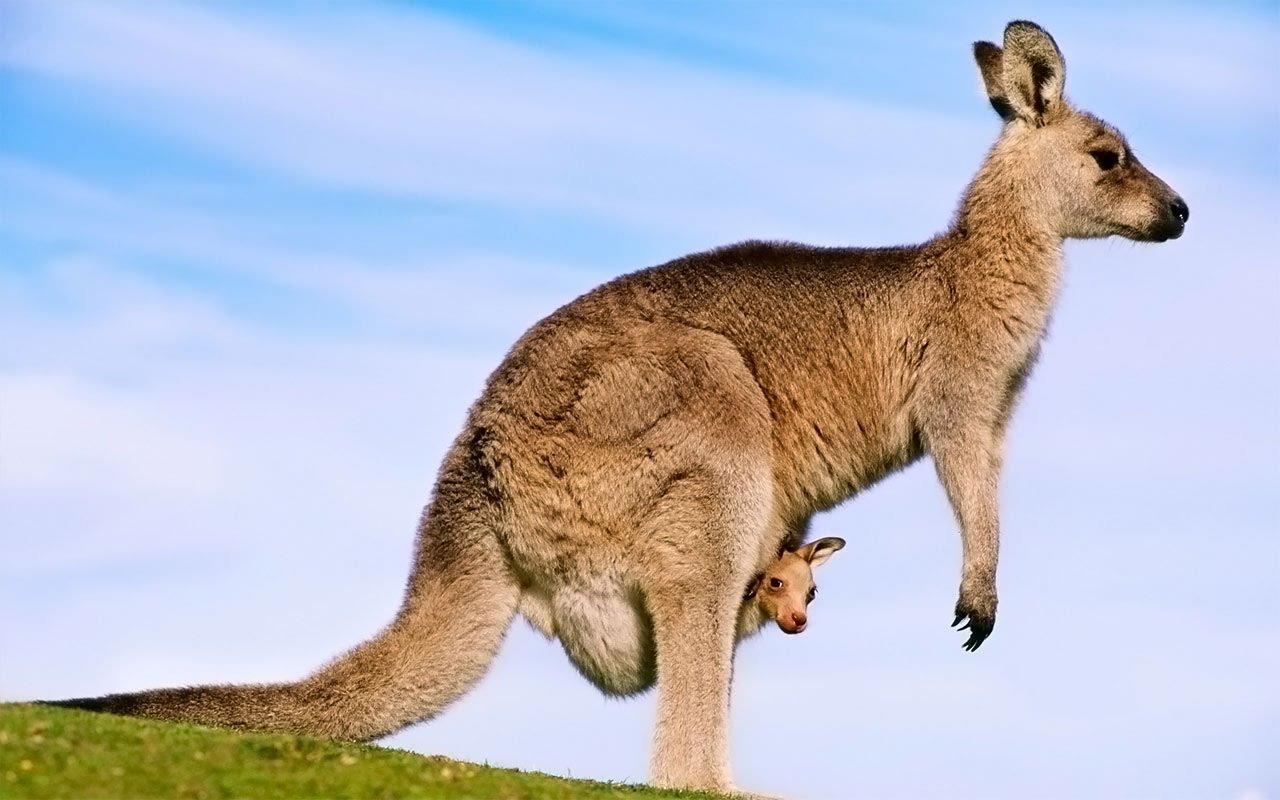 Avustralya - Yeni Zelanda - Tazmanya