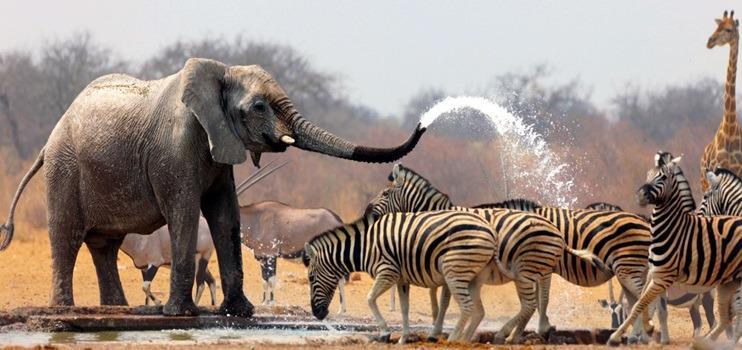 Güney Afrika (Şeker Bayramı)