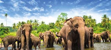 Sri Lanka: Colombo, Kandy, Dambulla, Polonnaruwa