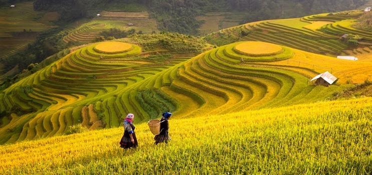 Tevekkül Ülkesi Vietnam