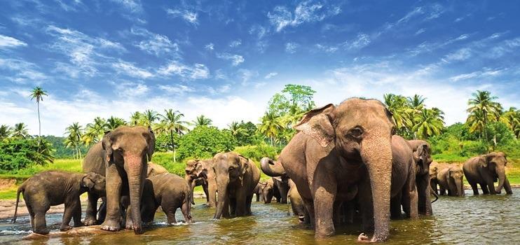 Sri Lanka: Yeşilin ve Budizmin Buluşması