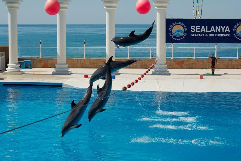 <p>Delfin&aacute;rium - Mořsk&yacute; svět</p>